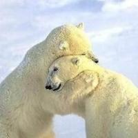 最后的拥抱