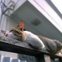 Nina猫